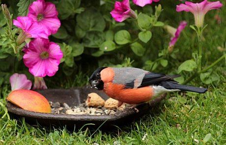 המנהג הקדום לזרוק לציפורים פירורים- מותר או אסור ? וכן מהם הטעמים לזריקה ומקור המנהג?