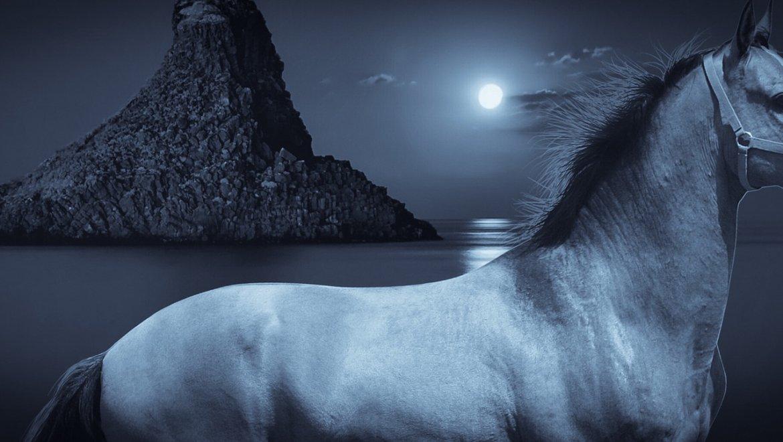 האביר על הסוס הלבן….