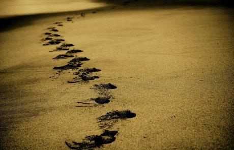 נפלאות בפרשת לך לך: תתקדמי, קומי וצאי למסע שלך!/ מירי שניאורסון