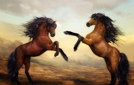 סוס ורוכבו/תמר משה