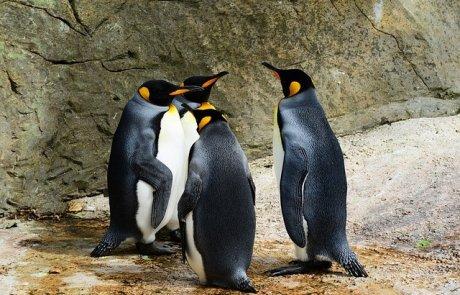 מה בין פינגווין לעידוד