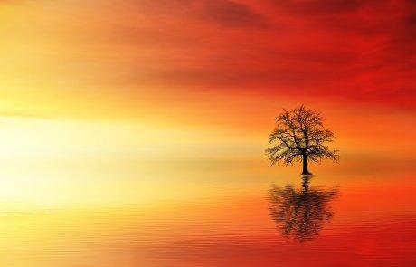 """""""נכון שאני עץ בין אלפי עצים"""" אבל… בשבילי נברא העולם"""