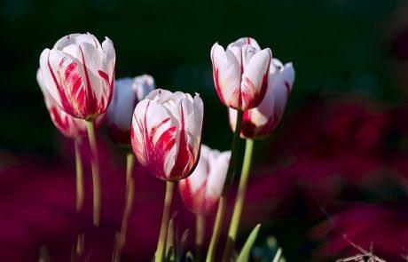 על שמחה ופריחה בחג האביב